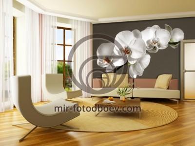 Орхидея в интерьере гостиной