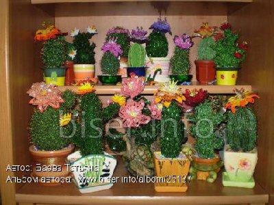 Оранжерея кактусов.